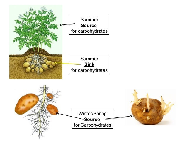 investigating osmosis using potato cylinders essay