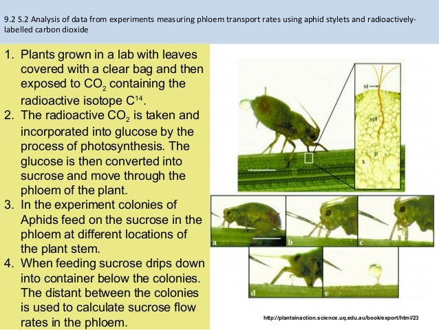 9.2 transport in the phloem of plants