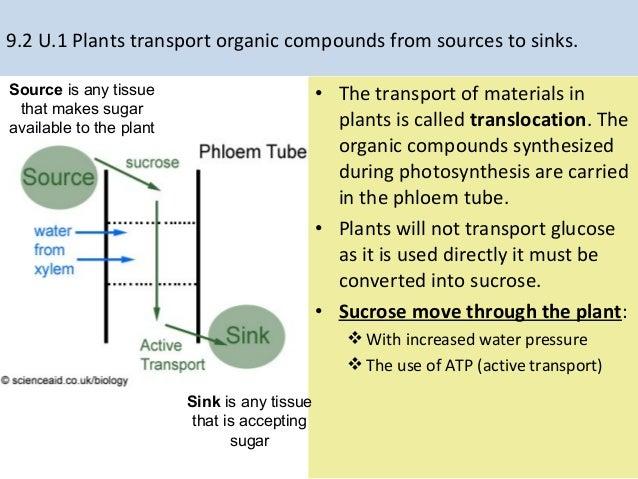 Phloem Sugar Movement Diagram House Wiring Diagram Symbols