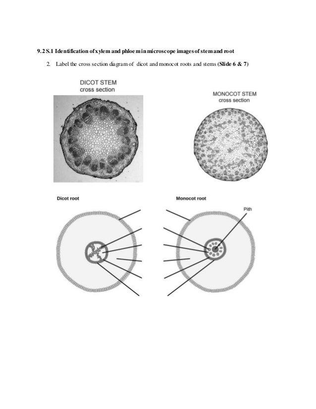 9 2 plant transport in the phloem