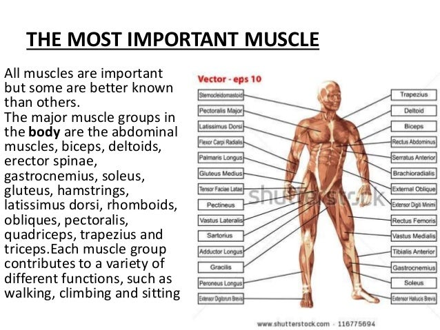 9. the muscles