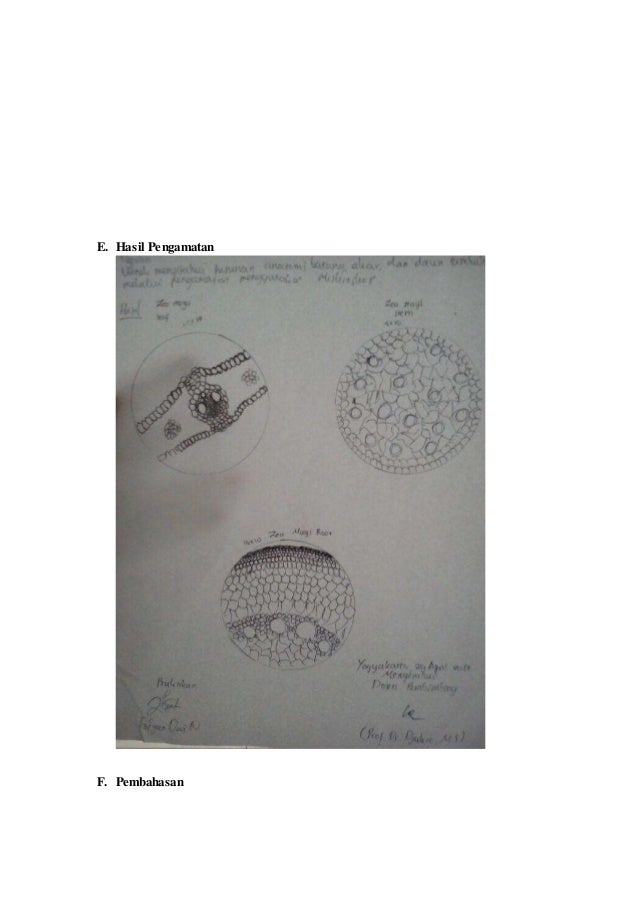 Struktur Anatomi Akar Batang Dan Daun Tumbuhan Monokotil Dan Dikotil