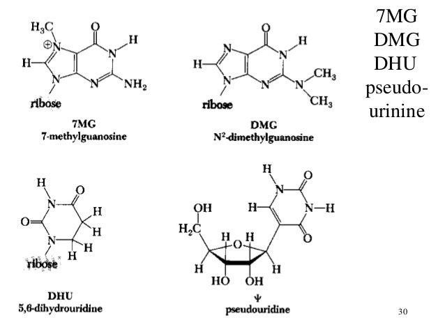 Nucleotide & Nucleic acids