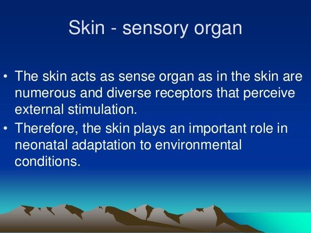 Nodus Skin