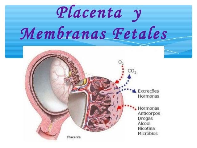 Placenta yMembranas Fetales