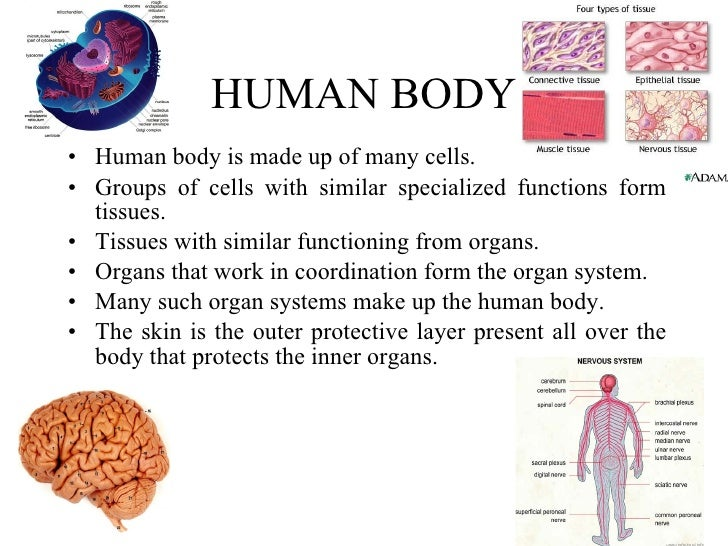 The Cells of Human Body