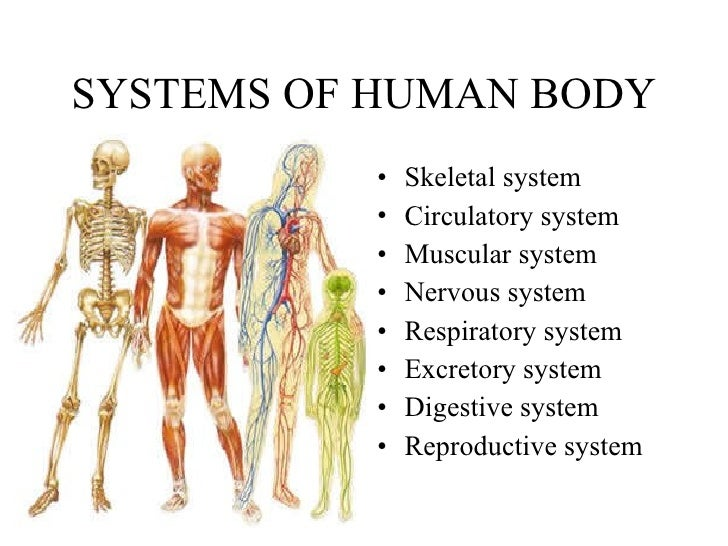 9. human body, Muscles