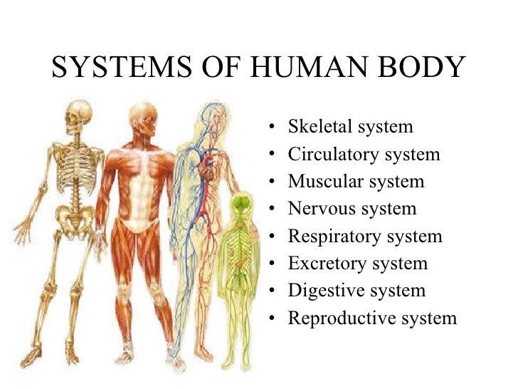 9. human body, Human Body