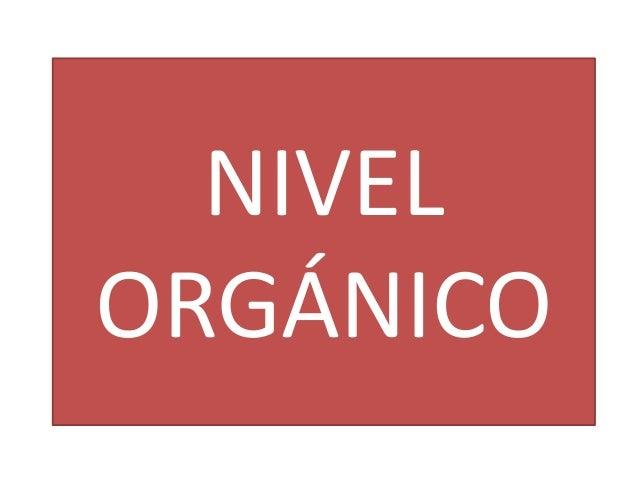 NIVEL ORGÁNICO