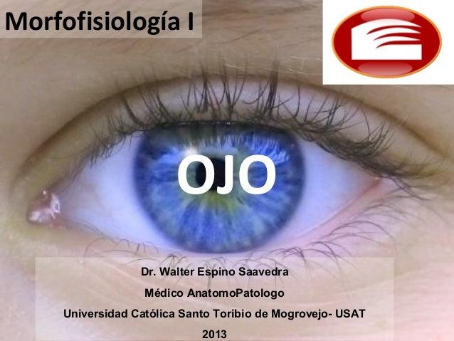 OJOMorfofisiología IDr. Walter Espino SaavedraMédico AnatomoPatologoUniversidad Católica Santo Toribio de Mogrovejo- USAT2...