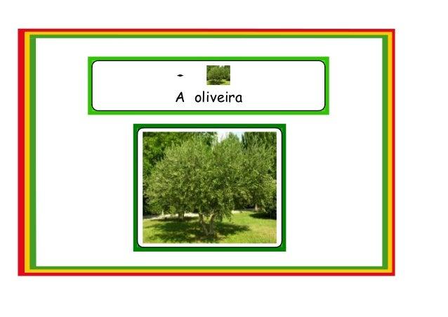 A oliveira
