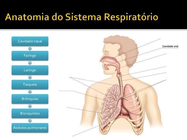 CN9-sistema respiratório Slide 2