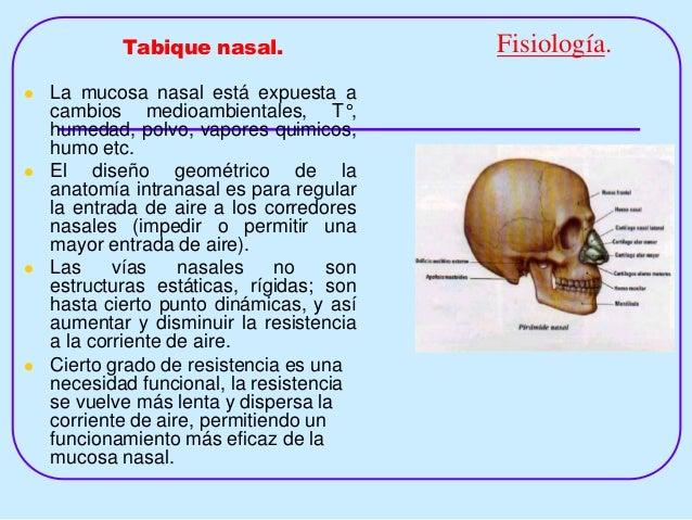 9 Tabique Nasal