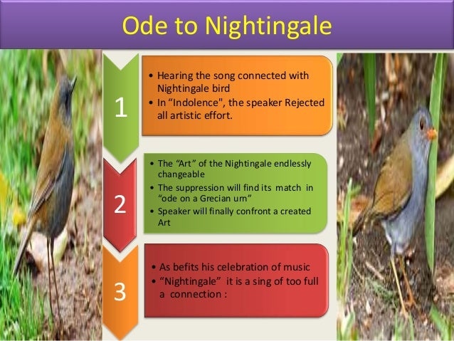 Critical note ode to a nightingale essay
