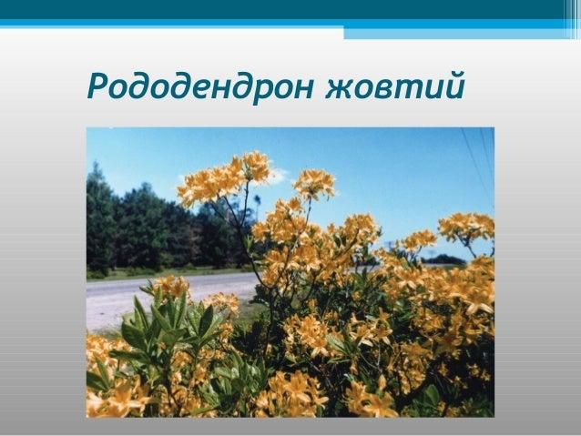 Рослинність лісостепу •Дерева: граб, бук, клен, липа, сосна, береза, тополя, горіх. •Кущі: ліщина, калина. •Трави: веронік...