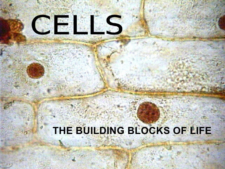 """cells the building blocks of life essay Cells—the building blocks of life gen 2:7 (nasb) in origin of species, charles darwin wrote, """"if it could be demonstrated that any complex organ existed which could not possibly have been formed by numerous, successive, slight modifications, my theory would absolutely break down""""."""