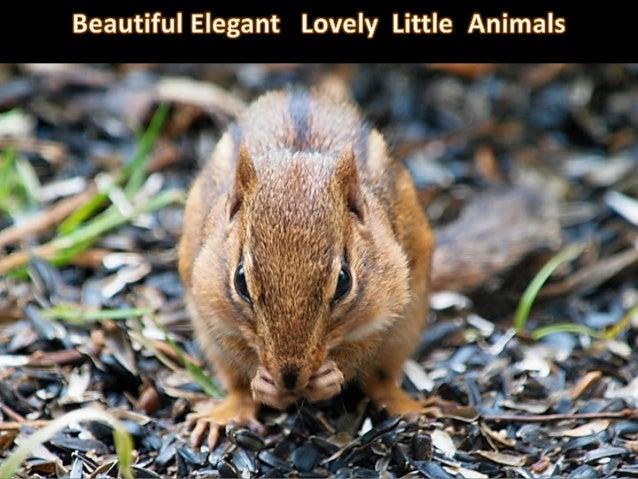 mimi Photos Picasa Music « mes amis les « écureuils » :