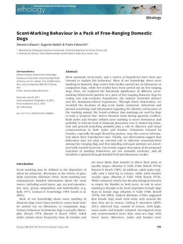 EthologyScent-Marking Behaviour in a Pack of Free-Ranging DomesticDogsSimona Cafazzo*, Eugenia Natoli† & Paola Valsecchi* ...