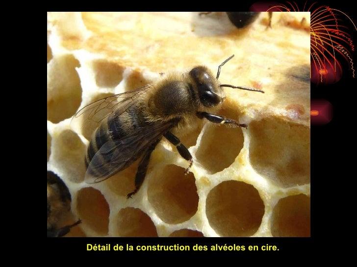 Les abeilles sont sur terre depuis 100 millionsd'années.De nos jours la vie des abeilles est menacée. Aidons