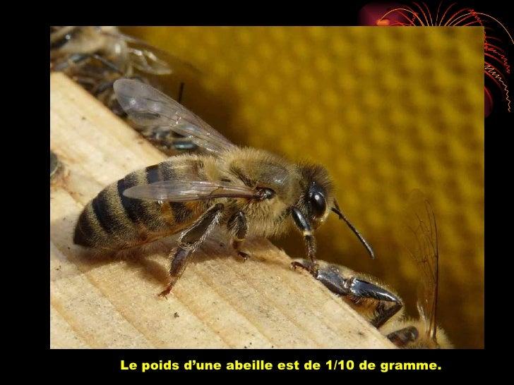 Pour 1kg de miel elle doit faire 50.000 voyages.Un Kg de miel représente 40.000 Kms, soit un tour de la t
