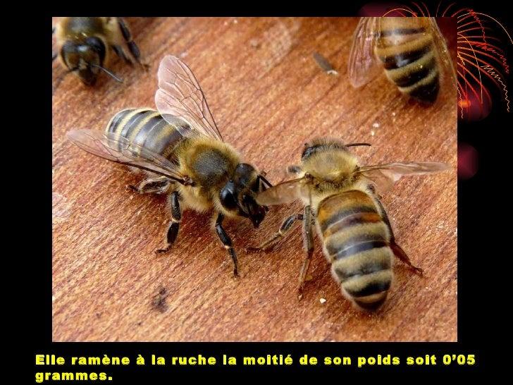 Les abeilles travaillent sans répitjour et nuit