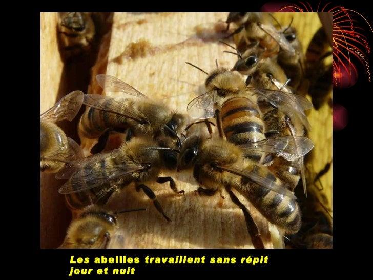 hange de nectar par trophallaxie, elle-même provoquée par cont                          antennaire.