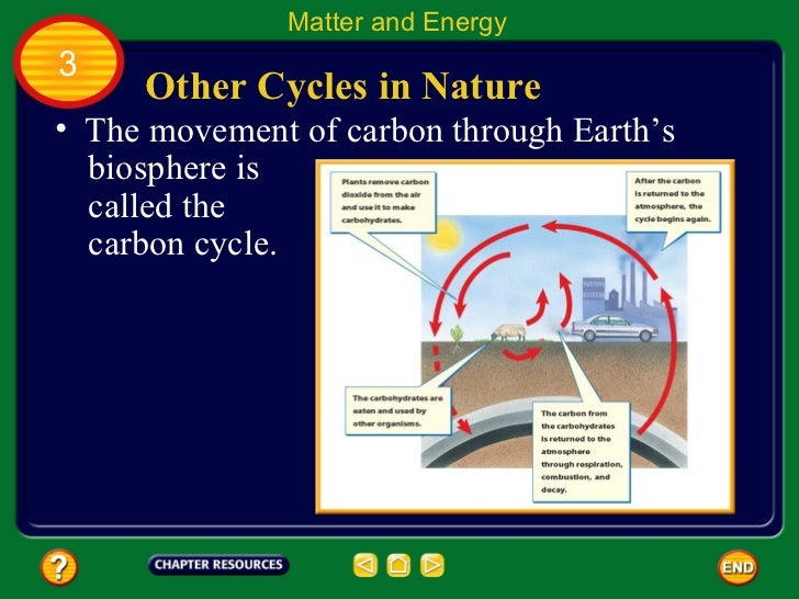Chapter 9.3: Matter and Energy in Ecosystems