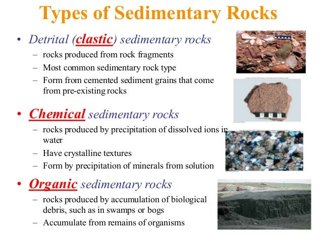 Fossils to sedimentary rock
