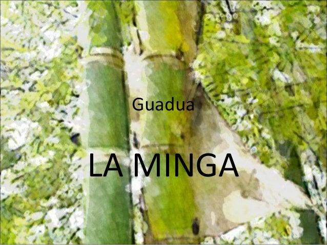 Guadua LA MINGA