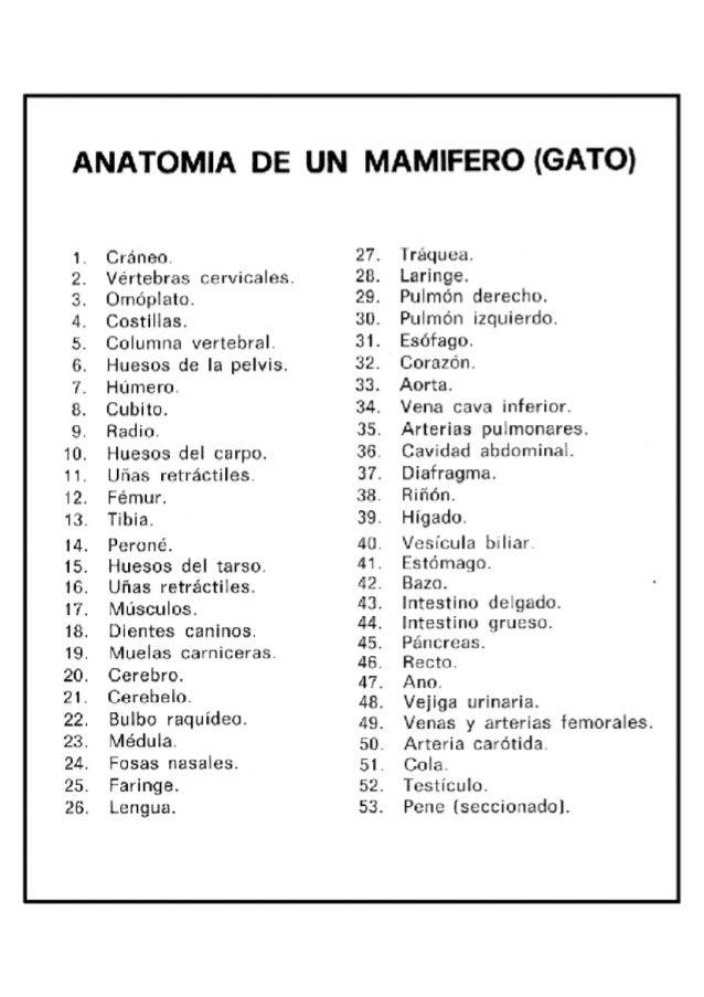 clave anatomia gato