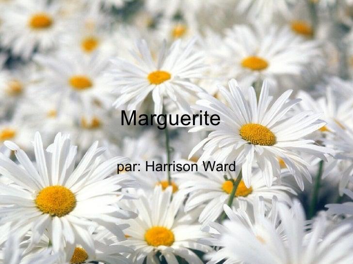 Marguerite  par: Harrison Ward