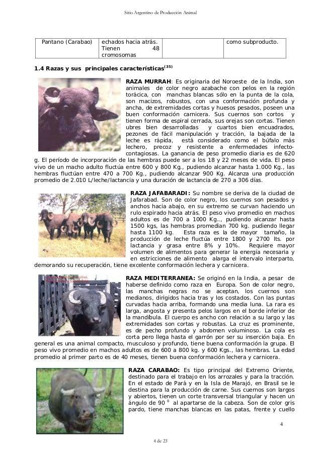 99 bufalos