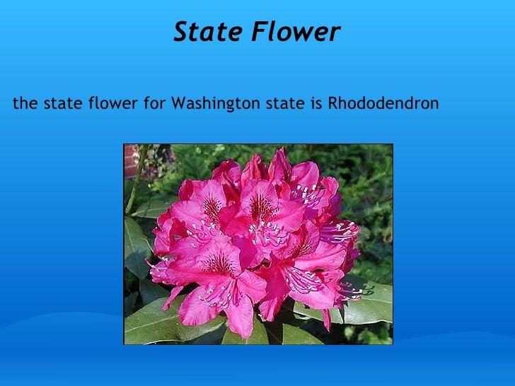 State Flower Of Washington Best Flower 2017