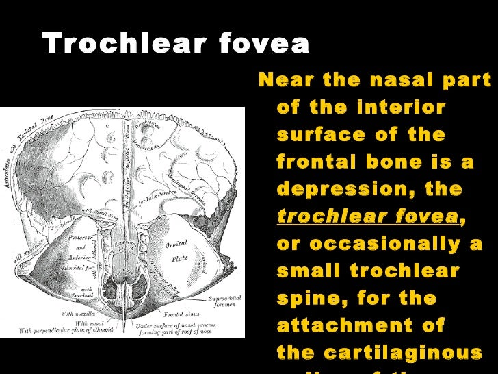 Trochlear Spine Images - Reverse Search