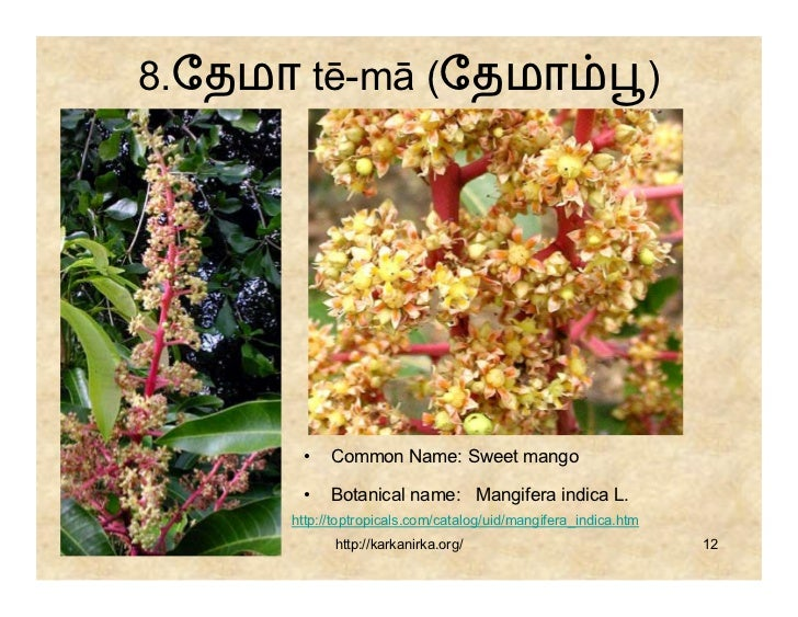 flowers name list in tamil - photo #38