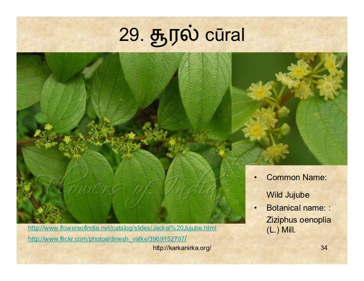flowers name list in tamil - photo #18