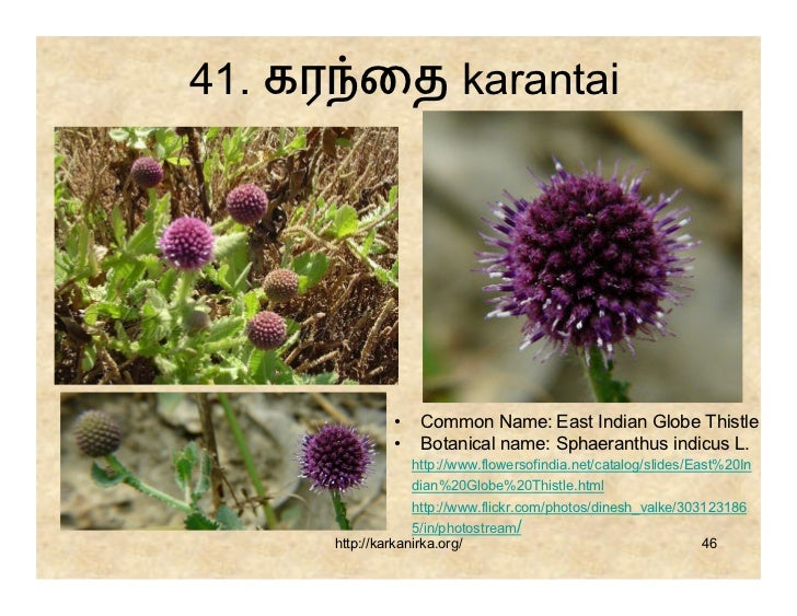 flowers name list in tamil - photo #23