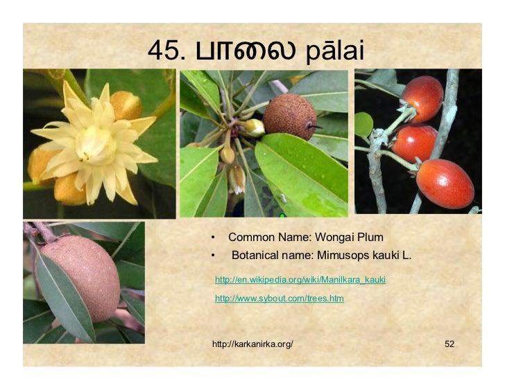 99 Tamil Flowers