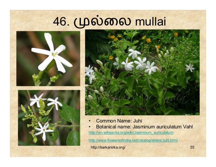 flowers name list in tamil - photo #36