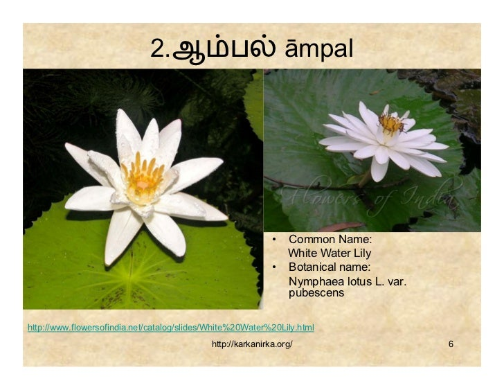 99 tamil flowers mightylinksfo