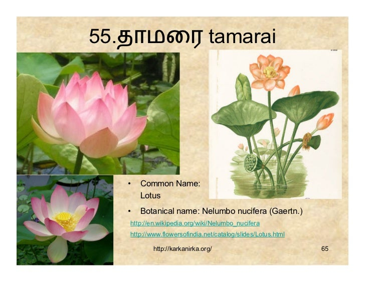 99 tamil flowers 65 63 mightylinksfo Image collections