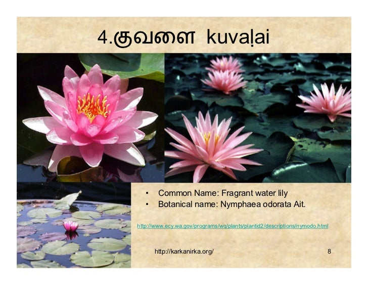 99 flowers names in tamil pdf books