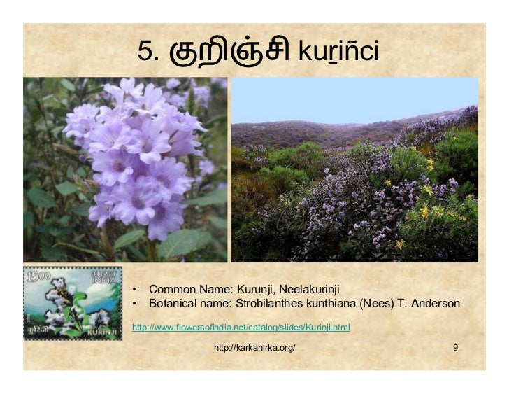 flowers name list in tamil -#main