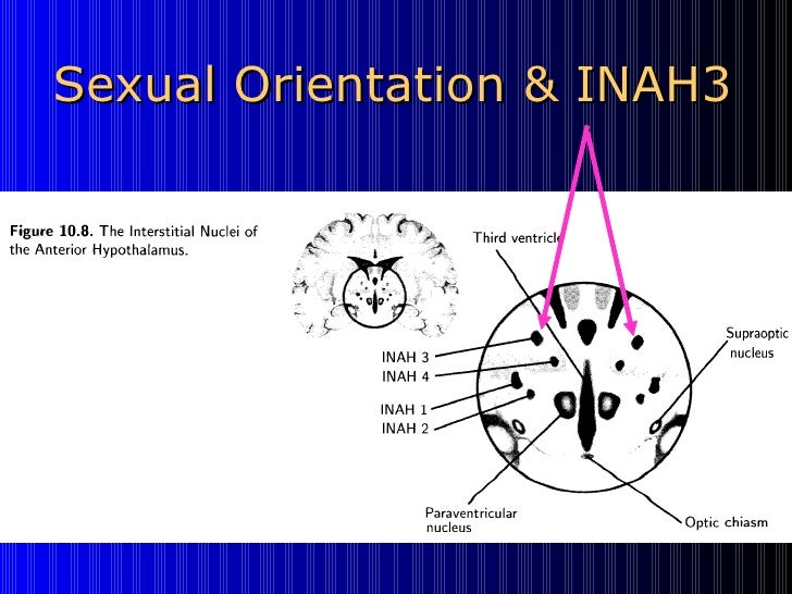 Inah3 homosexuality statistics