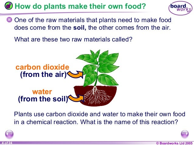 9 c plants and photosynthesis