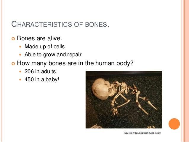 How many bones make up the adult skeleton