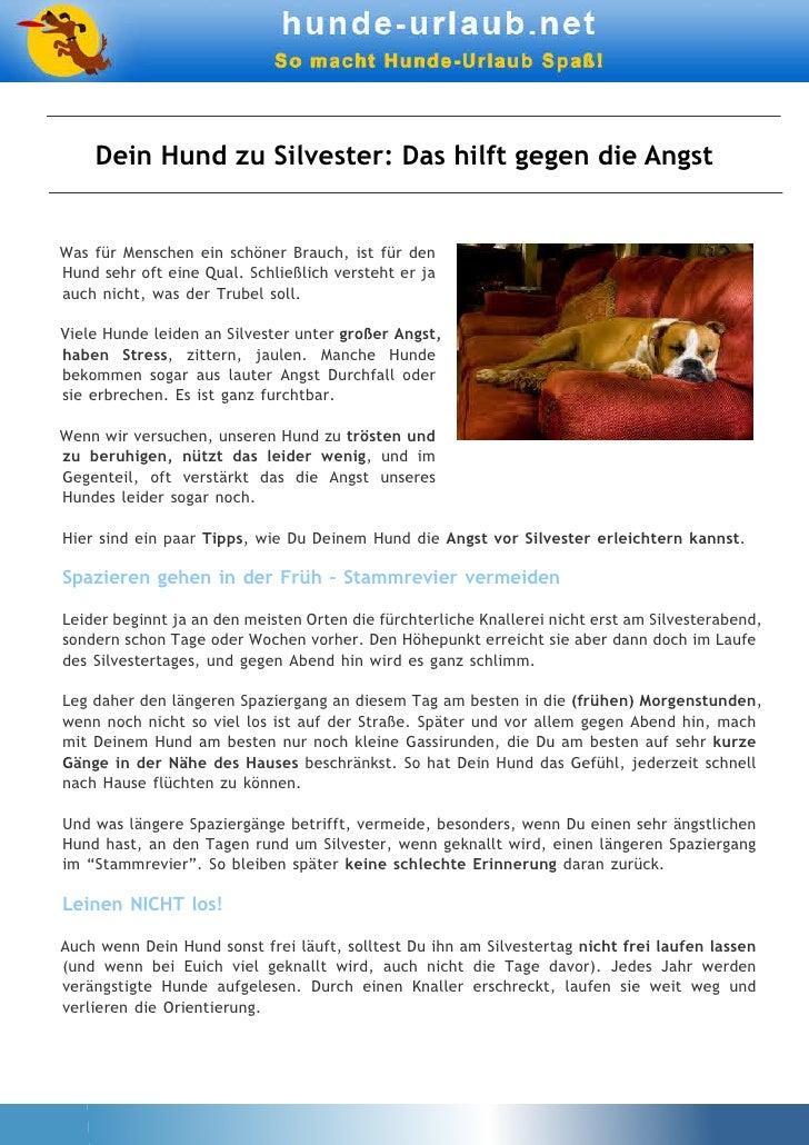 Dein Hund zu Silvester: Das hilft gegen die AngstWas für Menschen ein schöner Brauch, ist für denHund sehr oft eine Qual. ...