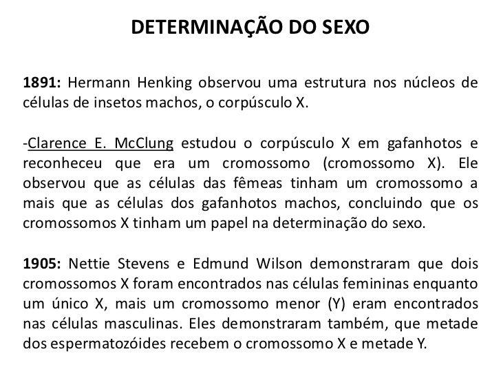 DETERMINAÇÃO DO SEXO1891: Hermann Henking observou uma estrutura nos núcleos decélulas de insetos machos, o corpúsculo X.-...