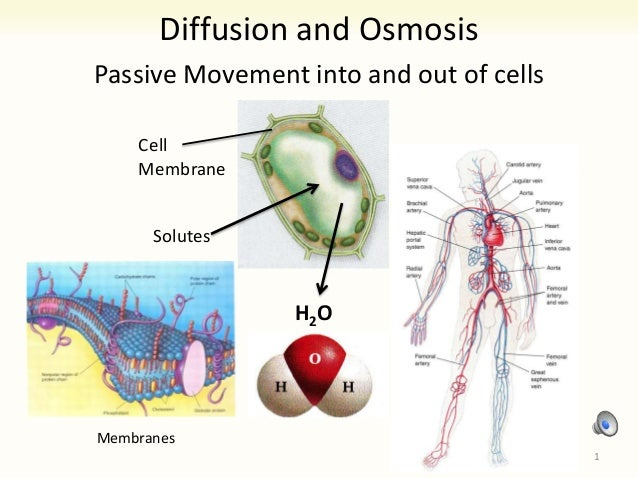 9 diffusion and osmosis (Lab) Thursday 9/19