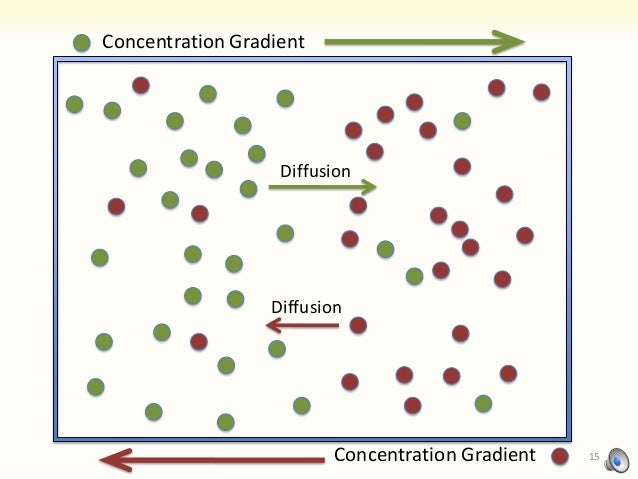 Lab 1 diffusion osmosis experiment 1 2 concentration gradients and membrane permeability
